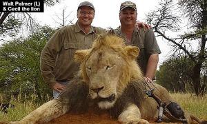 walt-palmer-kills-cecil-the-lion-lead